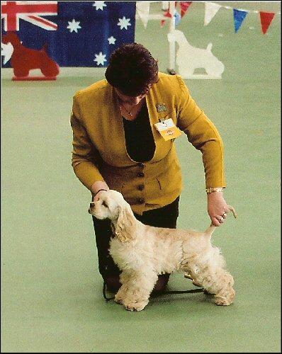 Calli Best Baby Puppy in Show ACSCV Specialty 2005